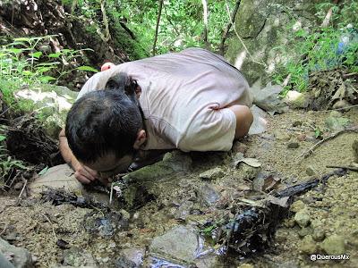 Che bebiendo agua del arroyo en el arroyo la Tacotera - Cerro Grande de Ameca