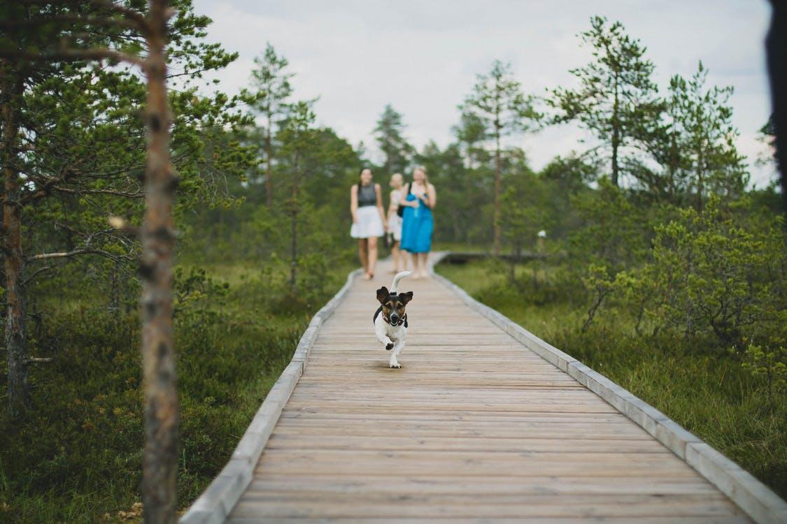 spacer z psem w lesie