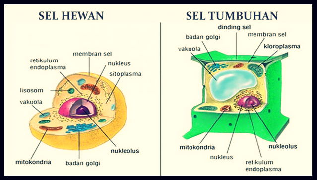 Contoh gambar sel hewan dan sel tumbuhan