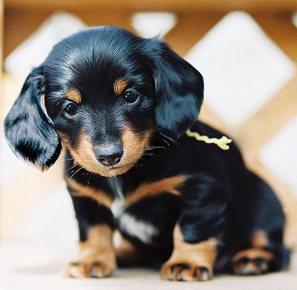 10 cute puppies oh those adorable puppies most beautiful