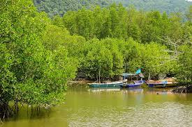 Ciri - Ciri Hutan Bakau [Mangrove] Menurut Ahlinya