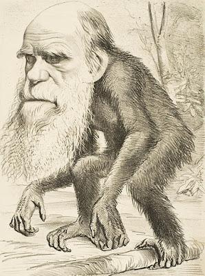 自然選択 ダーウィン