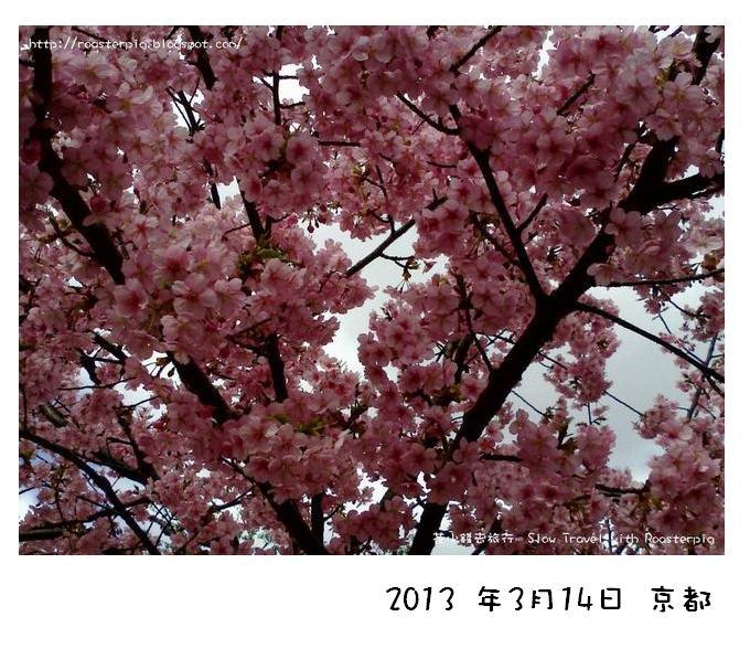 京都賞櫻時節