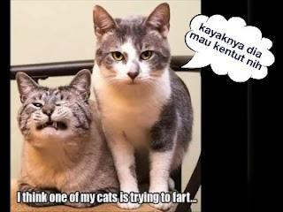 Bau kentut kucing