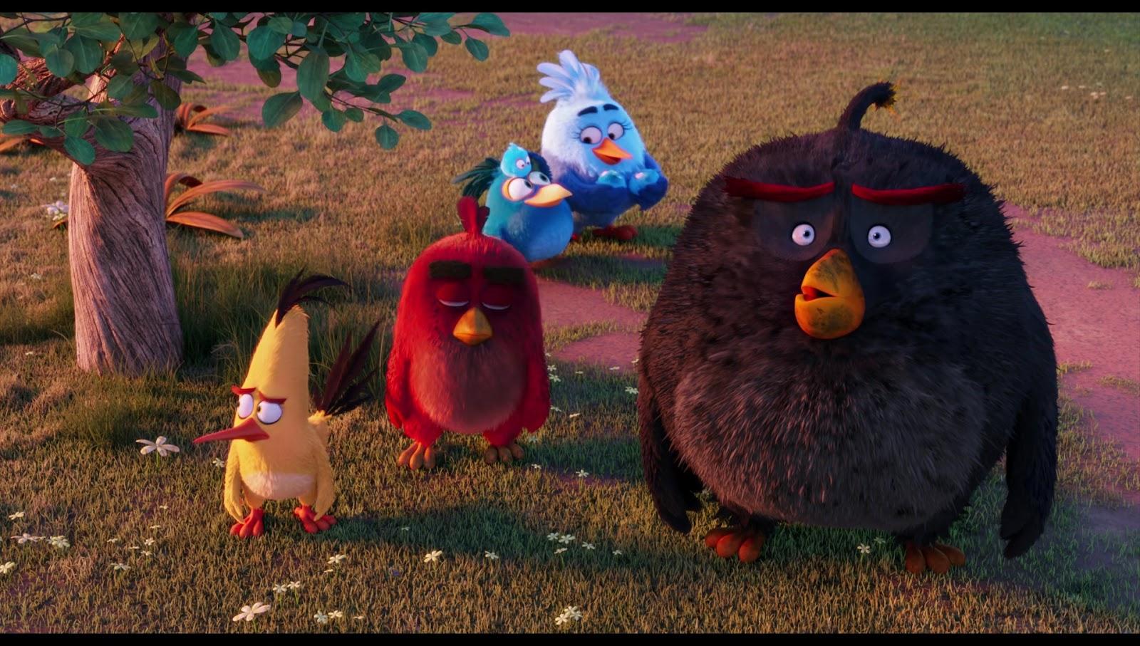 Captura de Angry Birds La Pelicula (2016) 1080p x265 HEVC Latino – Ingles