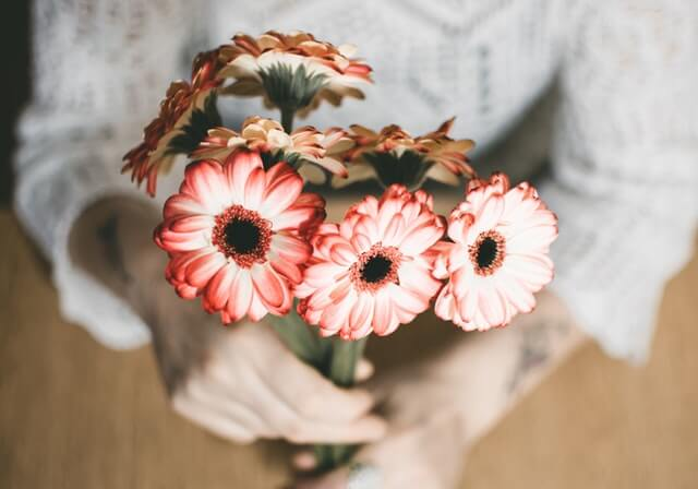 Selective Focus Photography of Person Holding Red Petaled Flowers HD Copyright Free Image