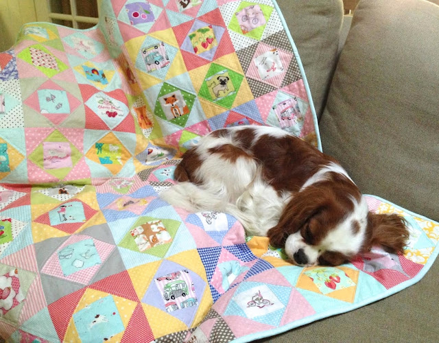 Blenheim Cavalier King Charles Spaniel on economy block quilt