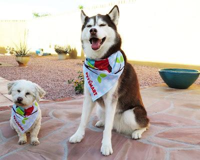 I love that PetSmart gives my dog a pretty bandana at the grooming salon