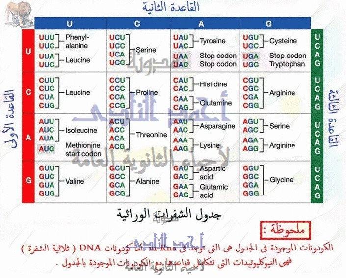 الشفرة الوراثية - genetic code – الجين – كودونات M.RNA – جدول الشفرة الوراثية - الثالث الثانوى