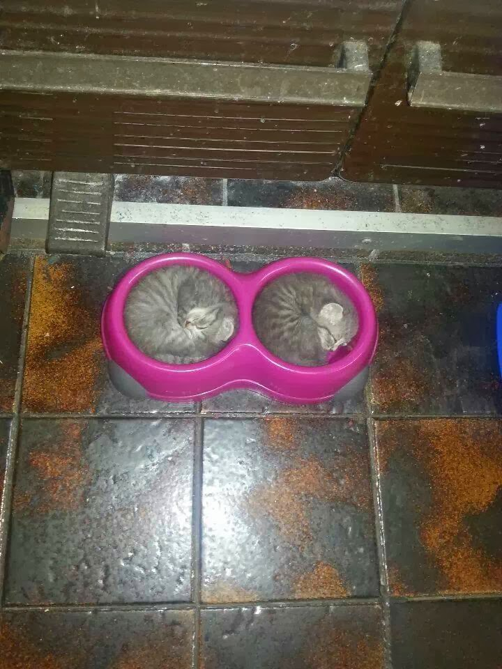 Funny cats - part 88 (40 pics + 10 gifs), two kittens sleep inside food bowls