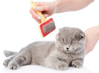 Best Ways to Groom Your Cat