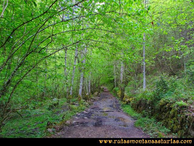 Ruta del Alba: Arboleda cubre el camino