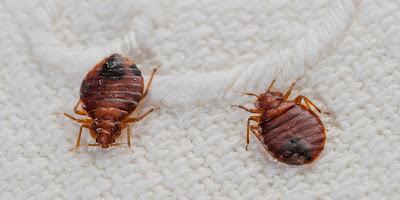افضل خدمات شركة رش حشرات بالمدينة المنورة