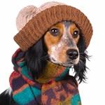 Cuidados com o cachorro no inverno