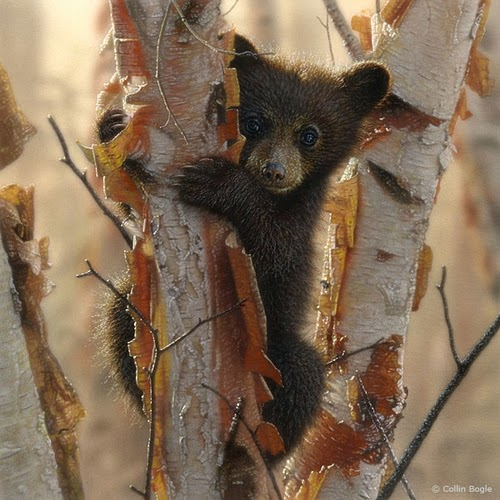 16-Black-Bear-Cubs-2-Collin-Bogle-Animal-Wildlife-in-Art-www-designstack-co