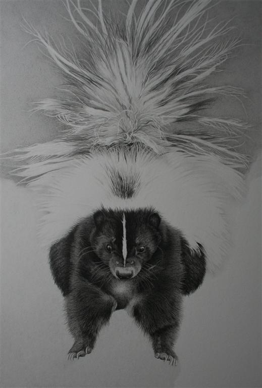 Clive Meredith Wildlife Art Skunk Drawing Tail Completed