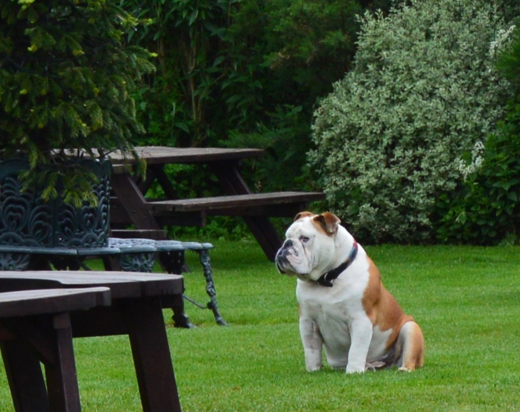 Overnight Stay at South Causey Inn | County Durham - Mr Rip