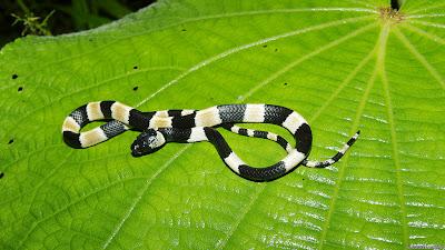 شاهد : عشرة أنواع جديدة من الكائنات الحية 130524114724_no_to_t