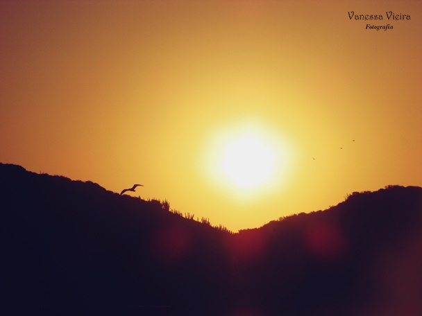 Fotografia, Projeto fotográficos, Vanessa Vieira, Photovanes, Blogosfera, projeto fotográfico, Essential Books. Blog Pensamentos Valem Ouro, foto, literatura e fotografia,