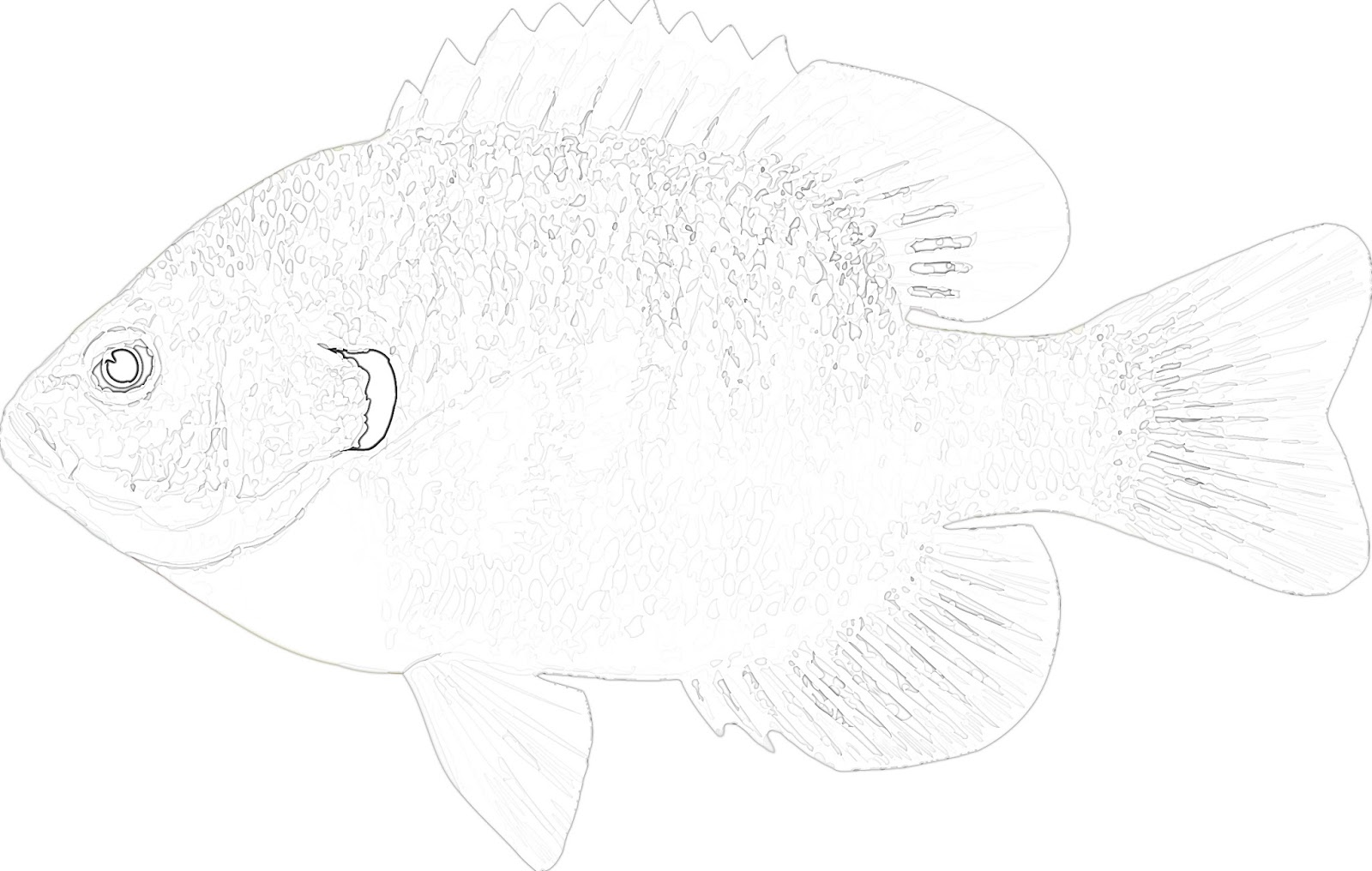 Coloring Pages Fish Free Printable Coloring Pages