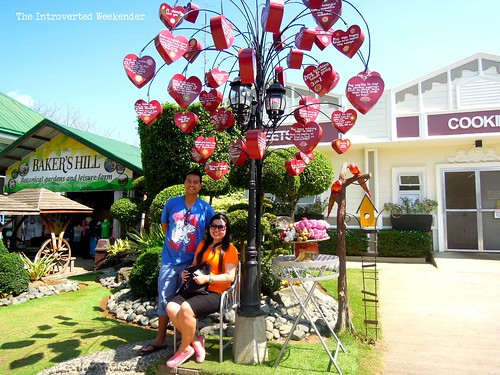Puerto Princesa Travel Guide: tree of hearts at Baker's Hill