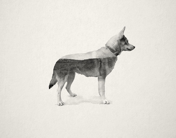 The Ghost Dog Series by Chanel Cartell and Stevo Dirnberger