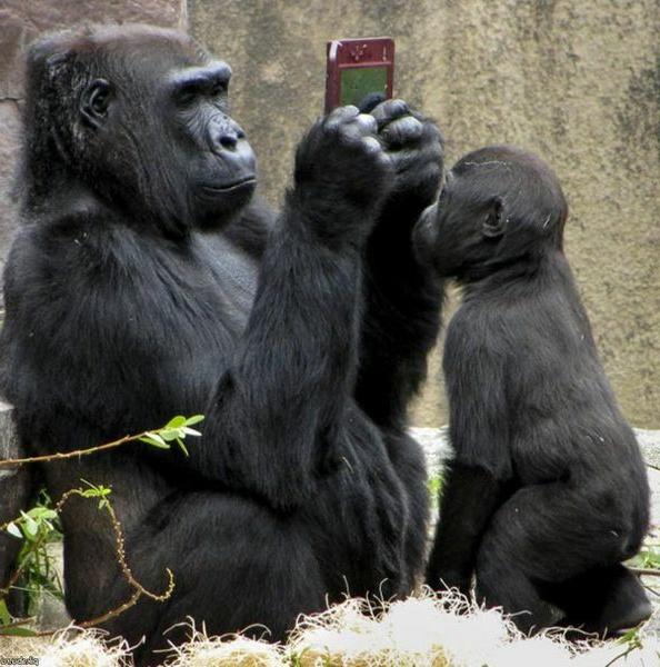 Gambar Monyet Lengkap dan Lucu  Kumpulan Gambar