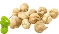 Ramuan Herbal Untuk Asam Urat Paling Direkomendasikan