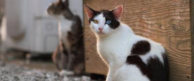 Γυναίκα στην Αυστραλία εγκατέλειψε τις 14 γάτες της και αυτές άρχισαν να τρώνε η μία την άλλη. Επιβίωσε μόνο μία