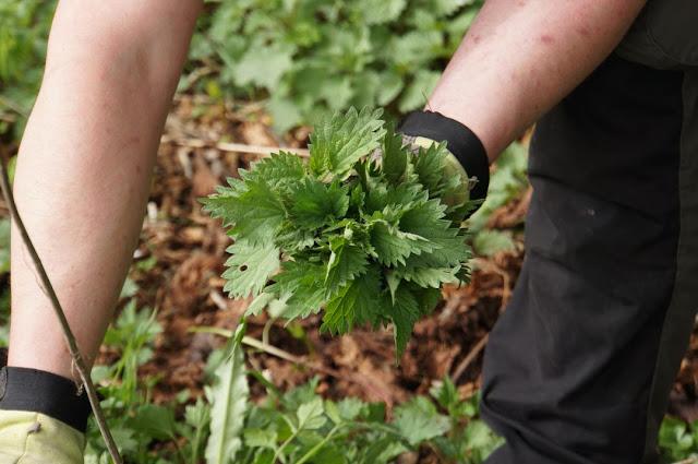 Wildkräuter sammeln Outdoor Küche