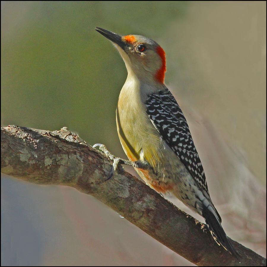 birds u0026 art synonymous in north carolina south burlington