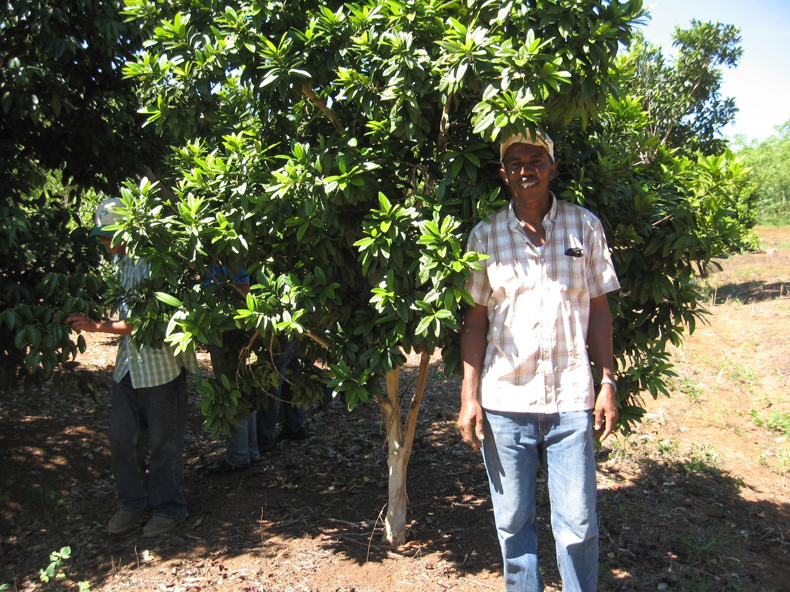 La Educación Agrícola El Cultivo De La Canela