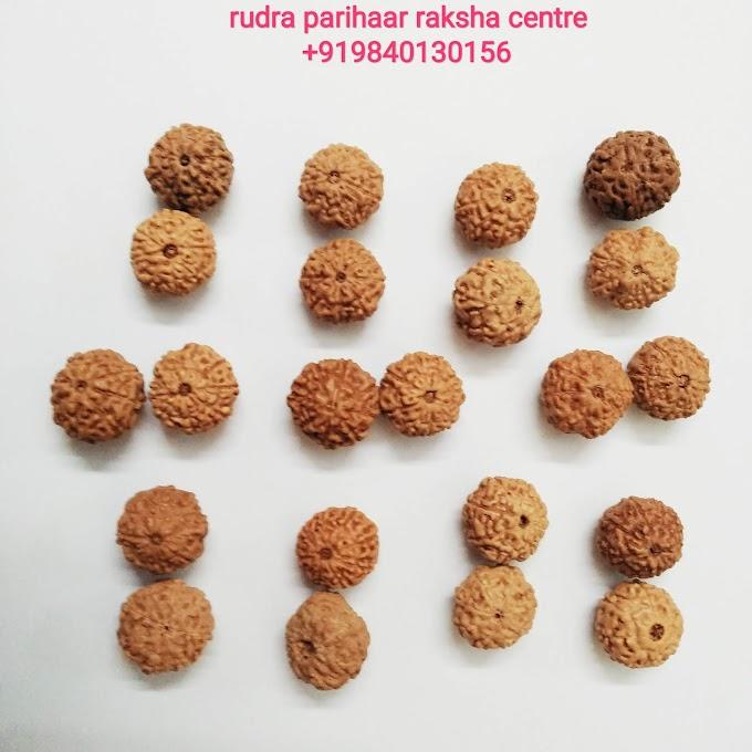 பணவரவை ஏற்படுத்தும் ஏழு மற்றும் எட்டு முக ருத்ராட்சங்கள்