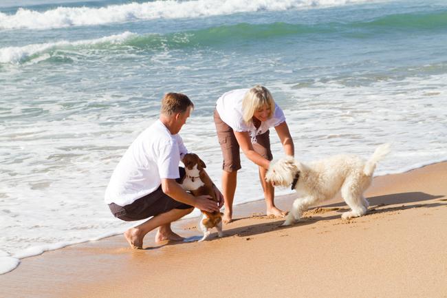 Dogoterapia, czyli terapia z udziałem psa