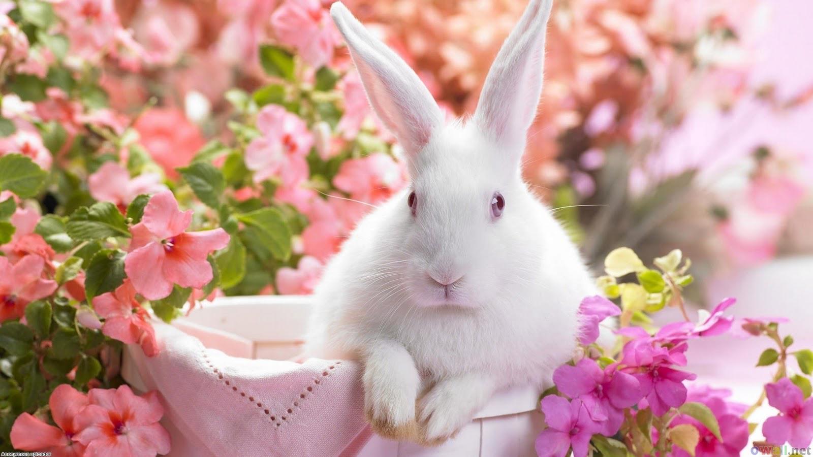 gambar anakan kelinci umur 3 hari gambar 3 kelinci