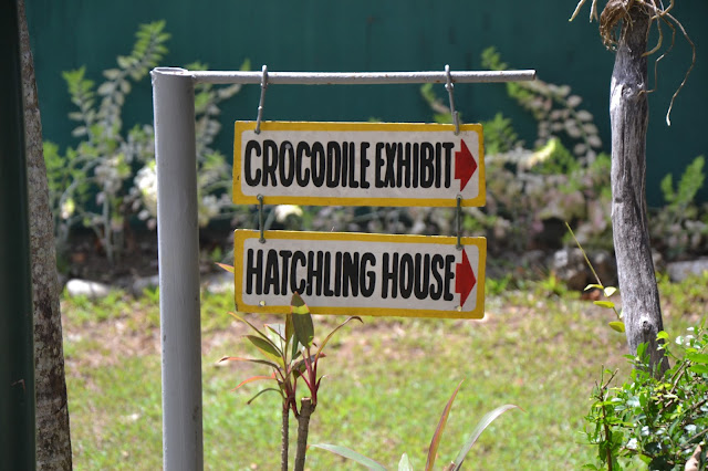 Hatchling house, crocodile exhibit