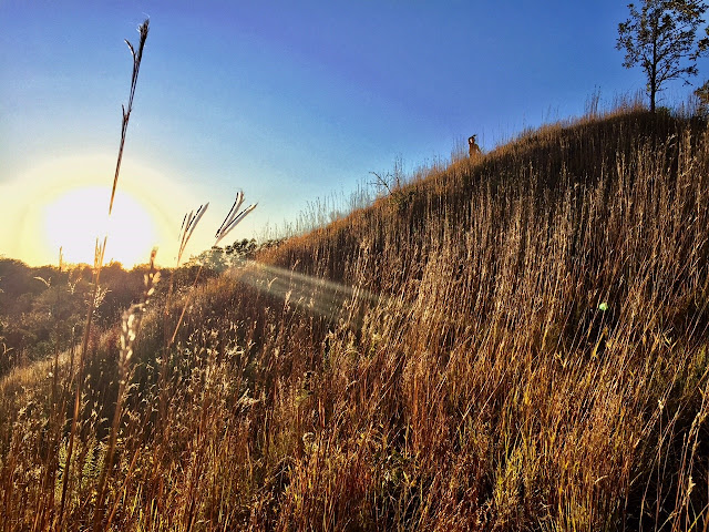 Loess Hills in Iowa image courtesy of Oh My! Omaha