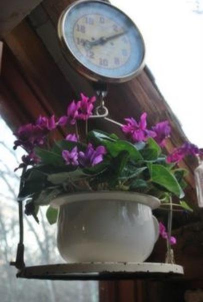 Bahkan timbangan pun bisa jadi pot bunga gantung