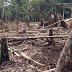 DLH: Dampak Jelas Hutan Gundul, Terjangan Air Bah tak Bisa Dibendung