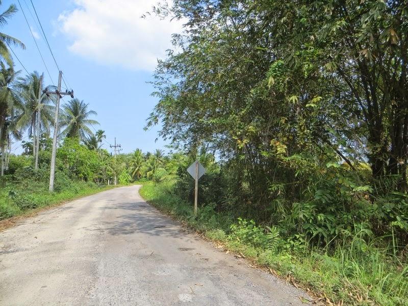 Дорога и пальмы