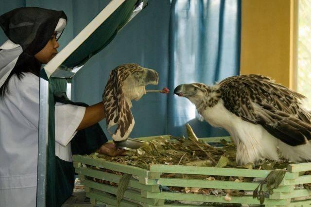 Elang Filipina - korban kekejaman manusia pada hewan