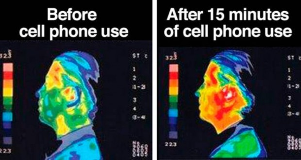 Antennas For Cell Phones Are Continually Searching Signals From Towers To Send And Receive Information The Body Or Brain Absorbs About Half
