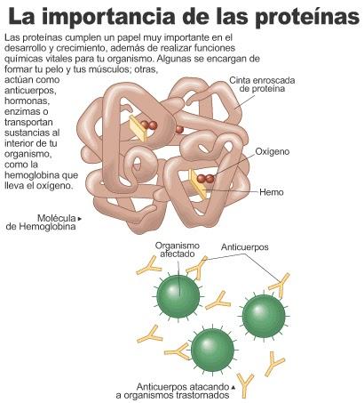 La información encima de regulacion hormonal del metabolismo