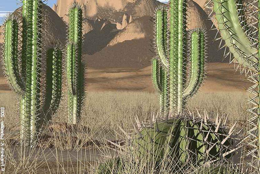 Sebutkan Ciri Khusus Kaktus Untuk Menyesuaikan Diri Dengan Lingkungannya Situs Belajar Online