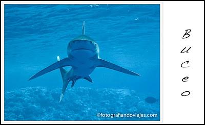 tiburón fotografiandoviajes