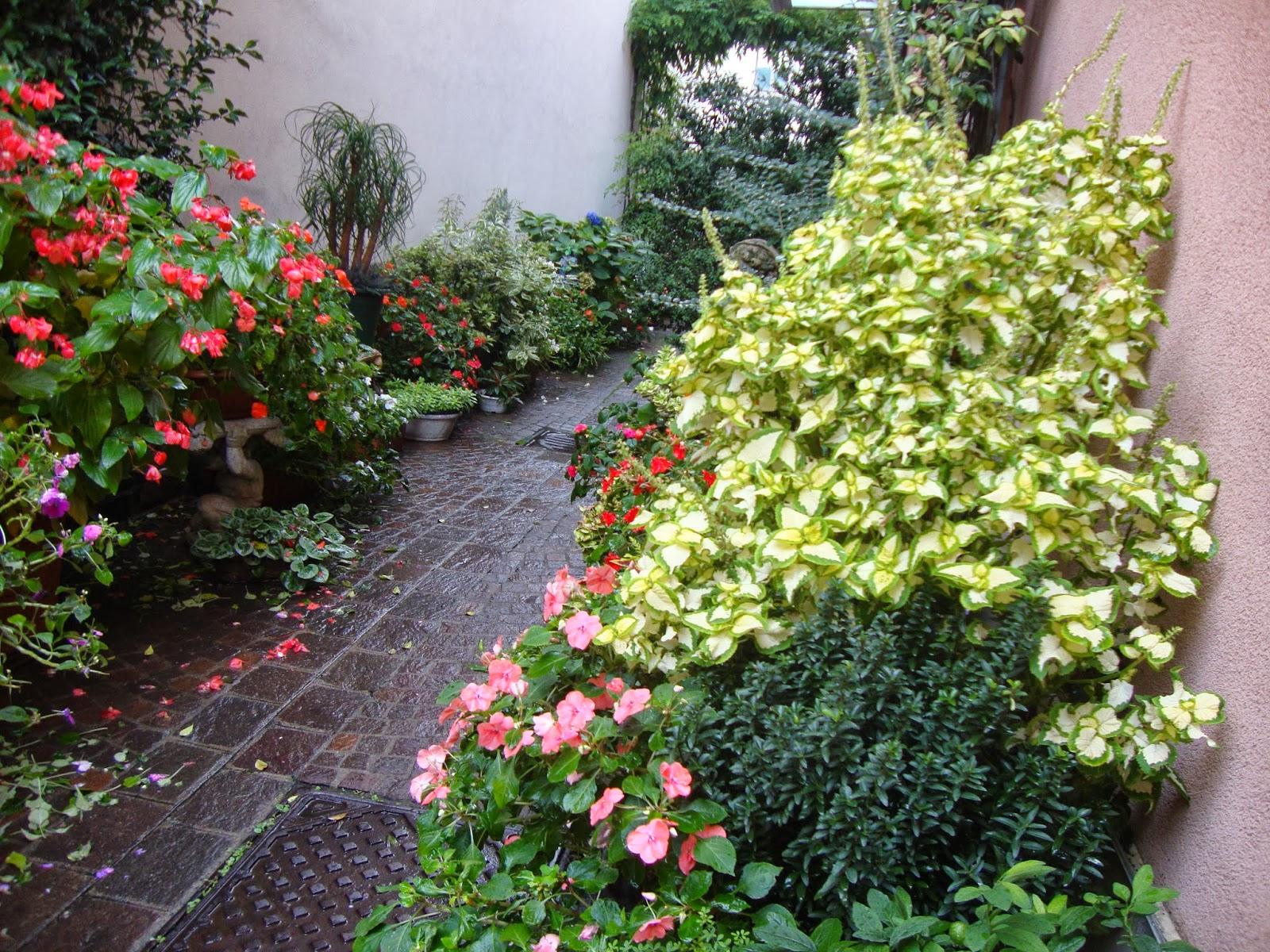 Un piccolo giardino in citt l 39 autunno in un piccolo - Vasi in giardino ...