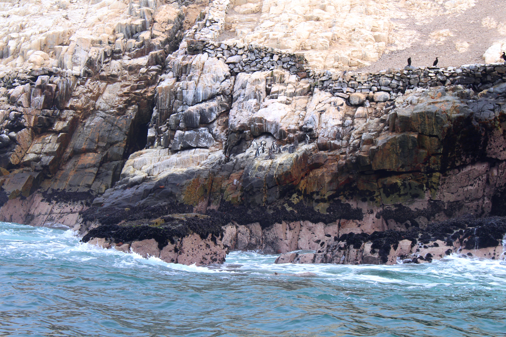 Penguins in Palomino Islands, Lima, Peru - travel blog