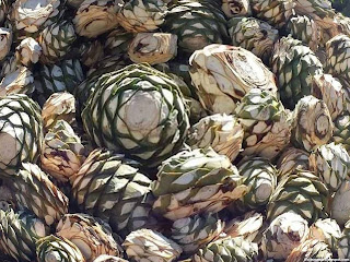Agave plant fruit images wallpaper