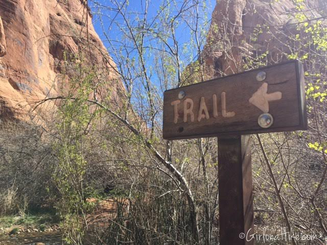 Left Fork of Mill Creek, Moab, Hiking in Moab with Dogs