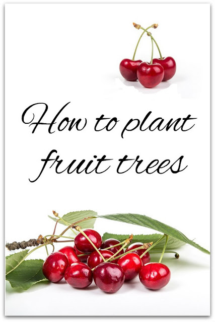 Where and how to plant fruit trees; what kind of fruit trees to choose.